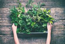 Léčivky na vaší zahradě – proč je přestat likvidovat jako plevel?